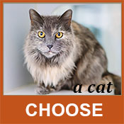 Choose a Cat